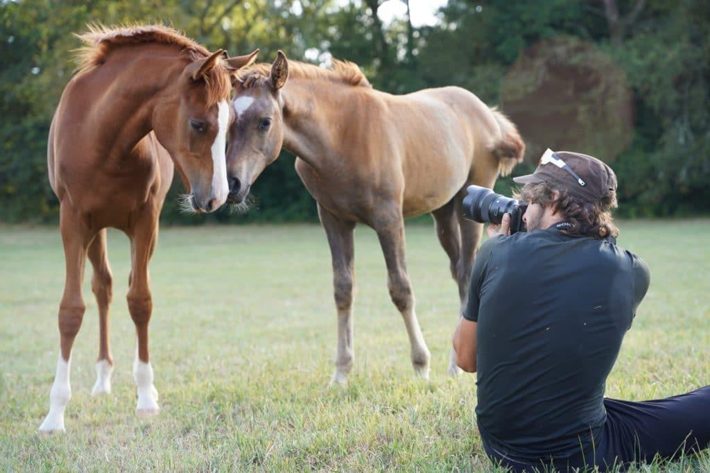 Photographe qui prend en photo des chevaux